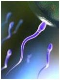 make sperm stronger