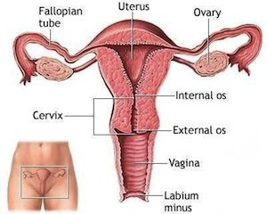How to Unblock Fallopian Tubes Naturally | Fallopian Tube